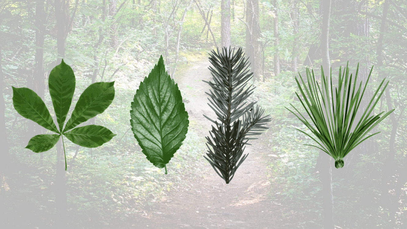 Differentiate between broad leaved and coniferous woodland ecosystems