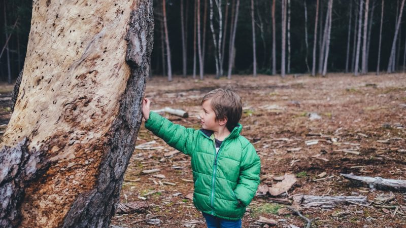 Summarise the Forest School approach to learning